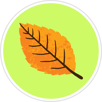 Birch_Leaf.png